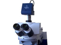 Microscope Cameras - 3D Embryo Imaging